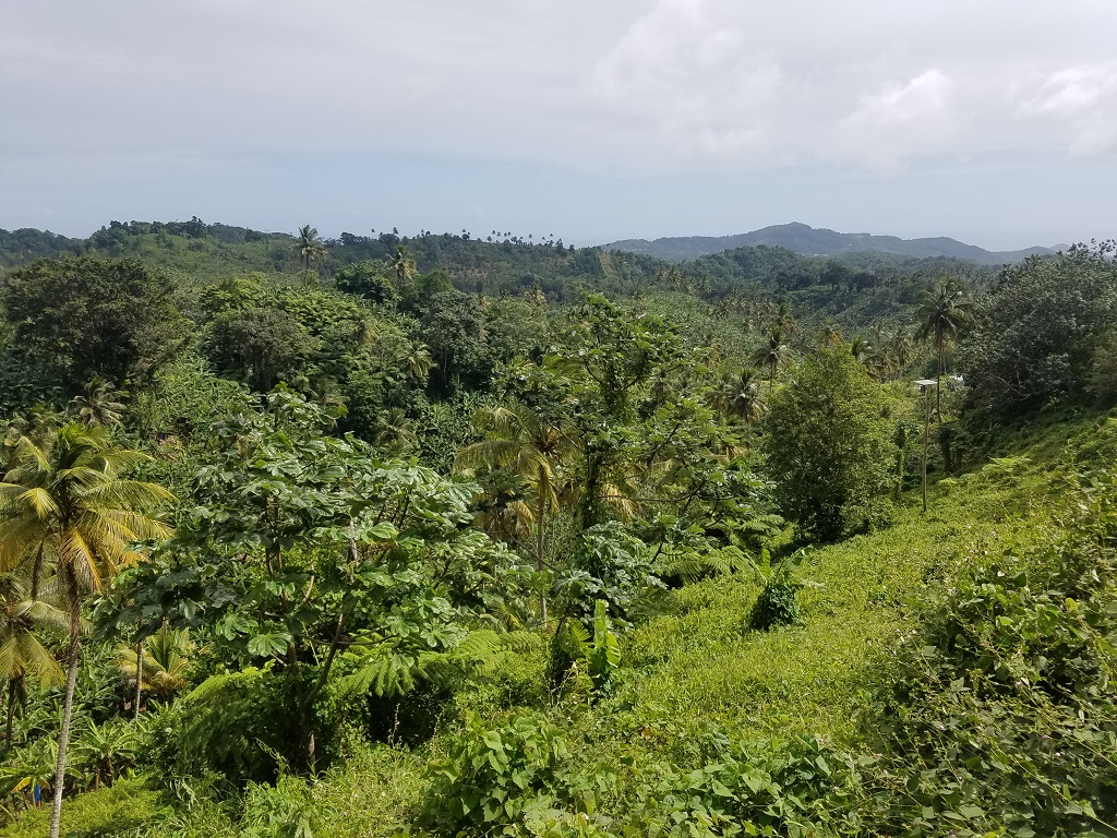 agriculture land for sale in st lucia
