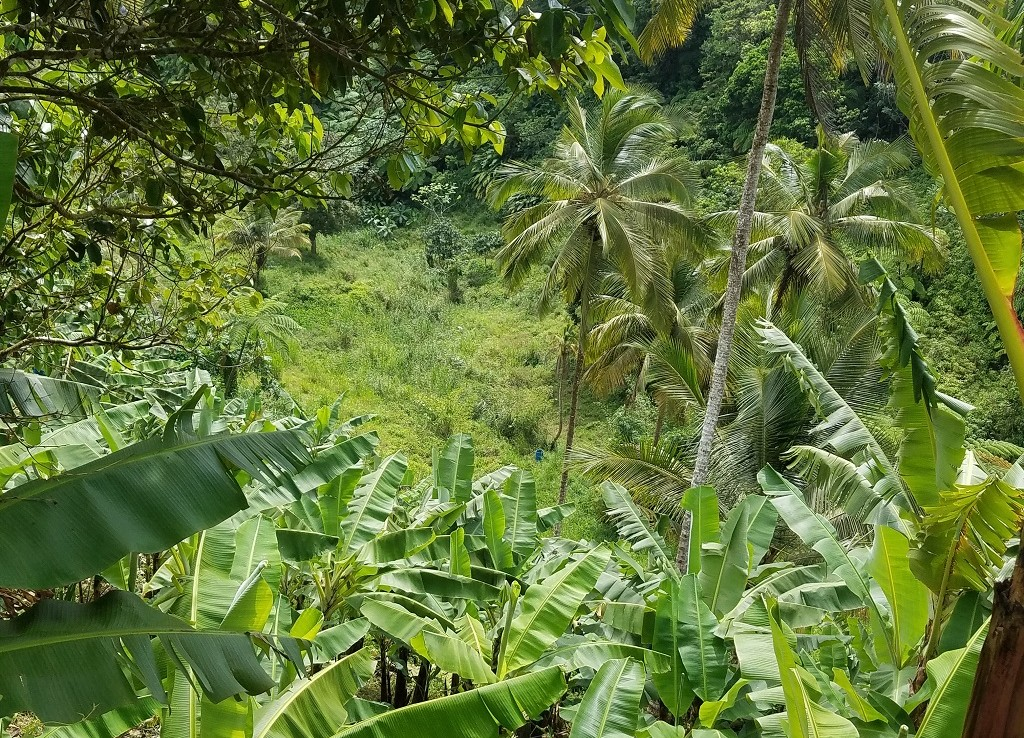 buy farm land for sale st lucia