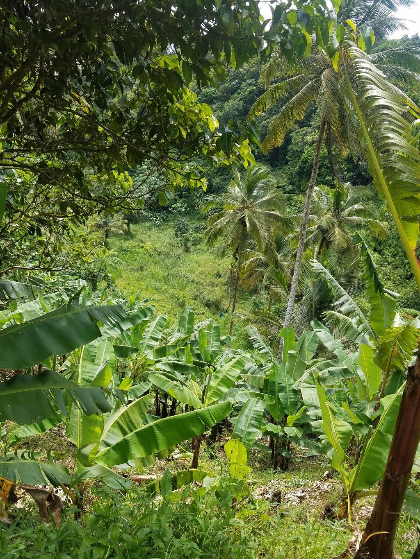 buy farm land for sale st lucia