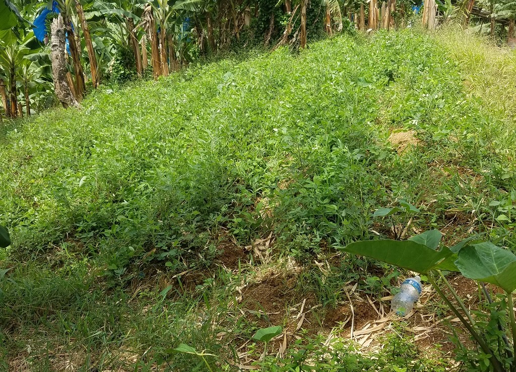 agricultural lands for sale saint lucia
