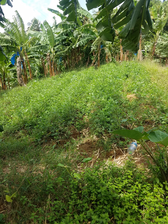 agricultural lands for sale saint lucia