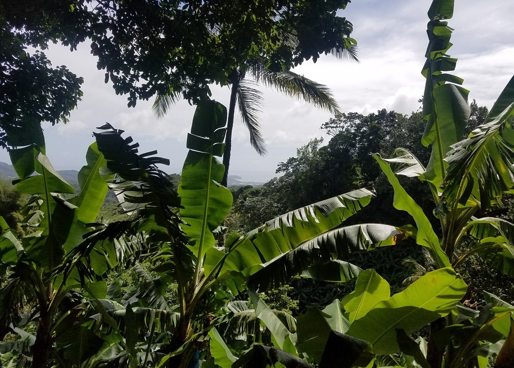 saint lucia farm land for sale