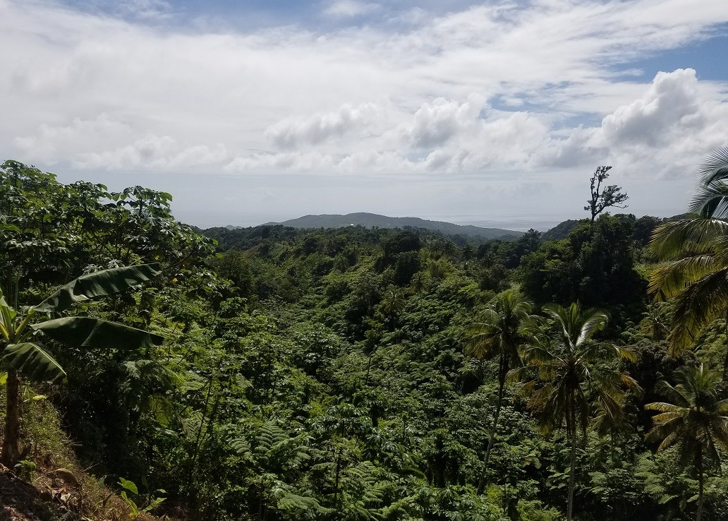 farm land for sale st lucia caribbean