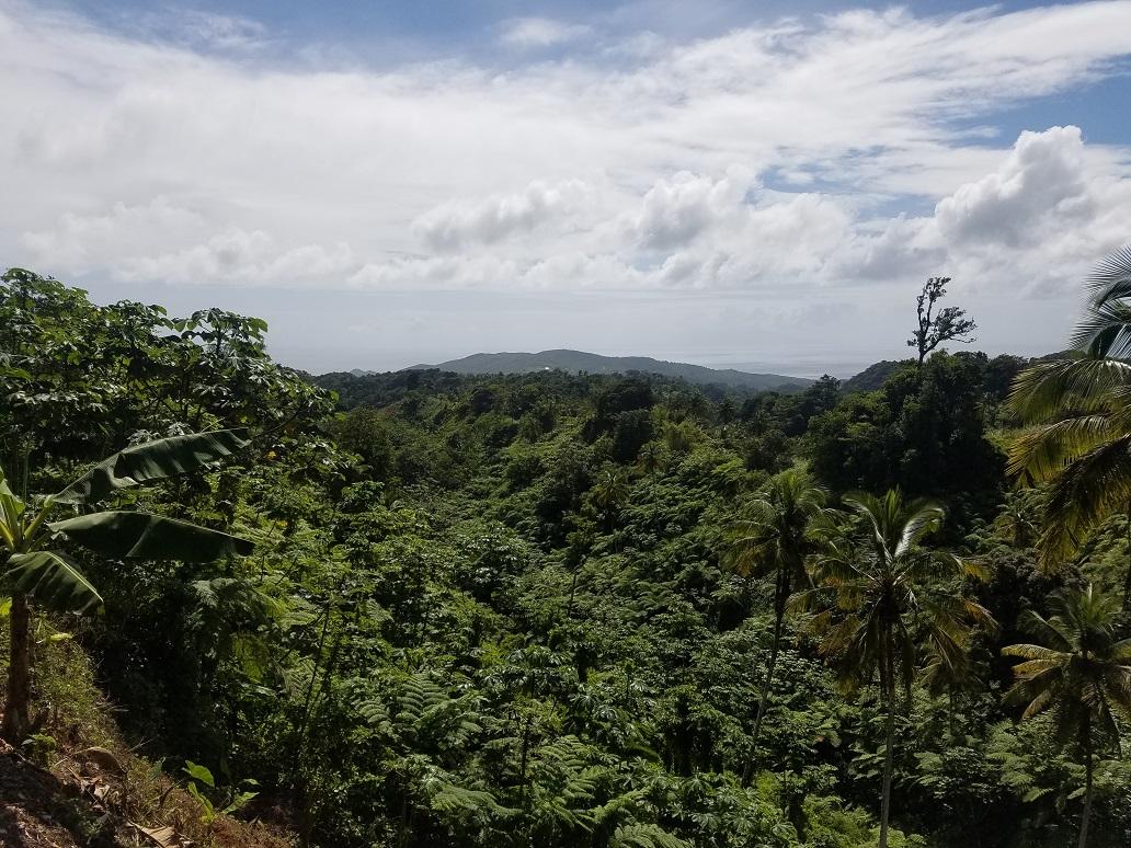 farm land for sale st lucia caribbean