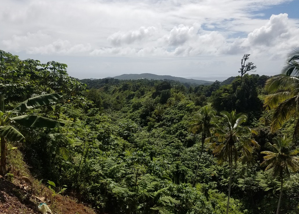 farm land for sale st lucia view