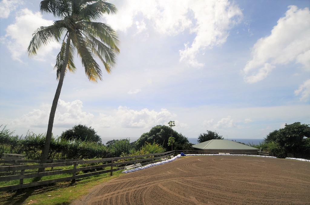 buy st lucia st lucia equestrian properties for sale near me