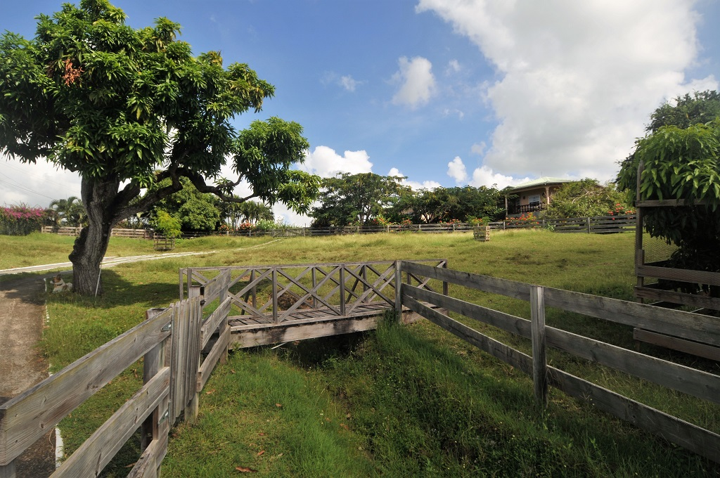 st lucia equestarian st lucia properties for sale near me