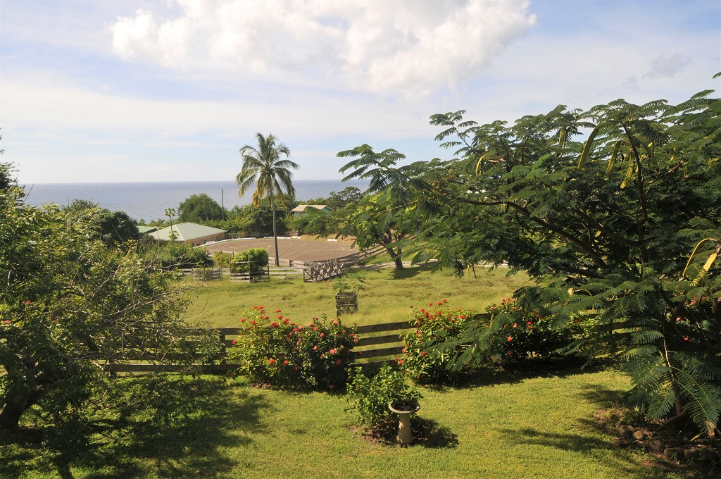 equine properties for sale st lucia