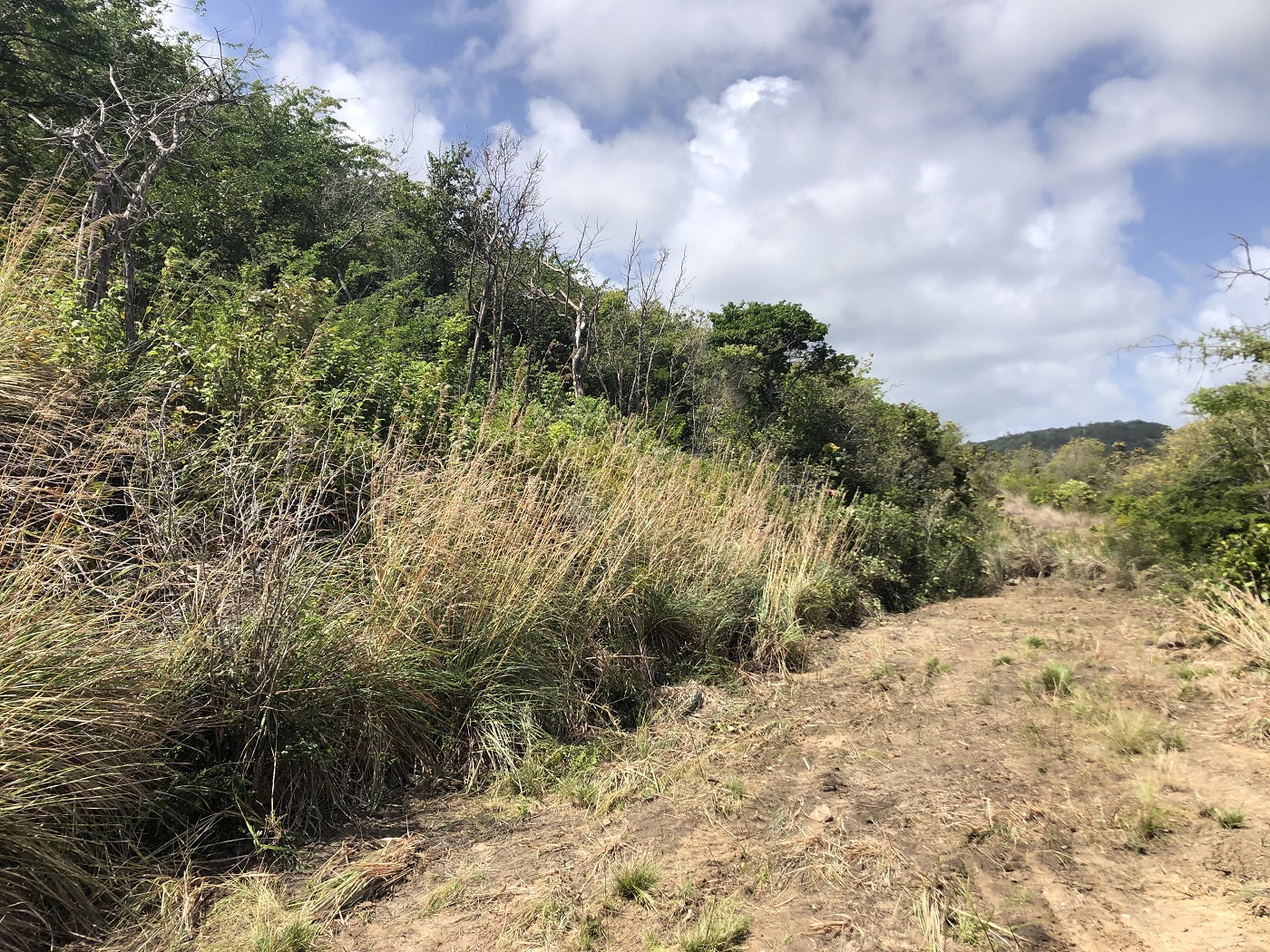 houses for sale in st lucia rodney bay