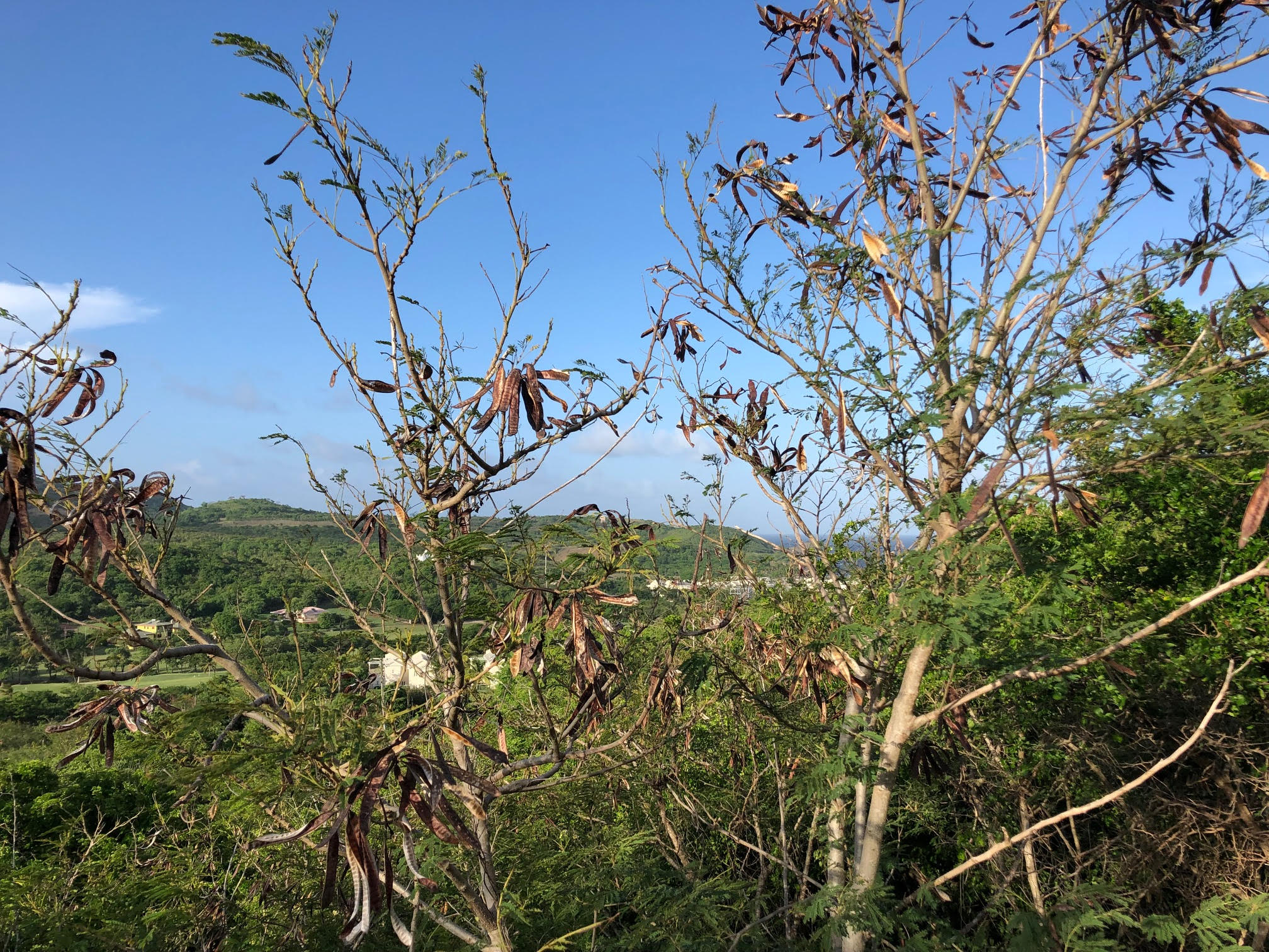 land for sale in cap estate south hills st lucia